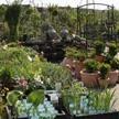 Blumen- und Pflanzenwelt Karsten Schlicht
